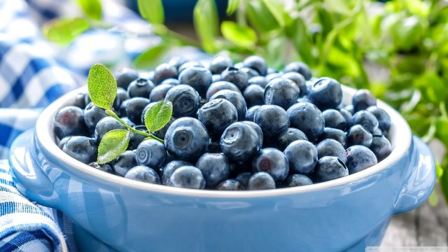 blueberries_leaves-wallpaper-1920x1080.thumb.jpg.a2442dbcfbbb22d98acf2e8d06df01ea.jpg