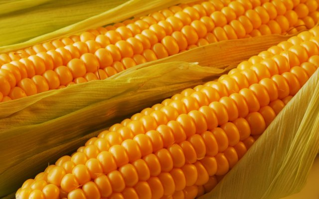 golden_corn_food_delicious_nature_hd-wallpaper-1328777.thumb.jpg.85b5d72d1d2a5f33eed788e2d5eef109.jpg